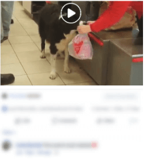 social media marketing for Veterinary-Business increase Video(Engagement)